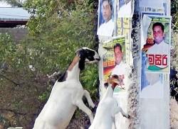 Parties propose, goats dispose