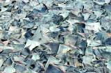 Lanka among world's top 20 shark killers