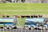 DCD in Milk: New Zealand a victim of its own success