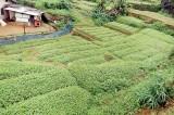 Hidden poison in vegetable – agrochemicals