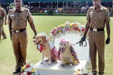 More barking and biting comments on police dog wedding