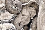 'Animal Verses': A  wildlife blockbuster