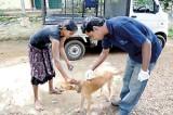 Help eradicate rabies in Sri Lanka by 2020 | World Rabies Day was on September 28