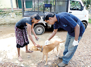 A dog being vaccinated by a  vet from the Blue Paw Trust