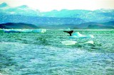 Oceans face 'deadly trio' of threats, study says