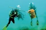 Operation starfish to save reef