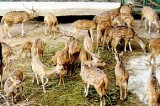Now a mini zoo for CHOGM delegates