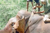 Indian elephant expert critical of conservation methods