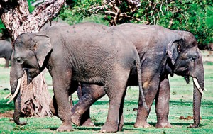Back-to-back---the-young-tuskers