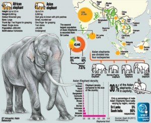 ElephantGraphic