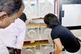 Sterile males to tackle war against dengue