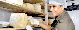 He knows them all: Jezeem with his cheeses at his Kandy workshop. Pix by Susantha Liyanawatte