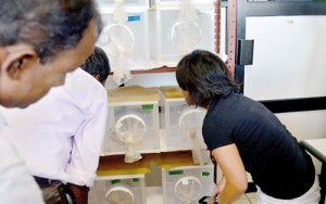 Tests being carried out at the  mosquito-rearing facility at the AMC's Entomology Unit