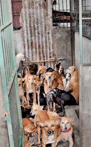 The dog pound: One too many.  Pic by Indika Handuwala