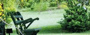 Greening Mirijjawila: Views of lush foliage and serene landscape