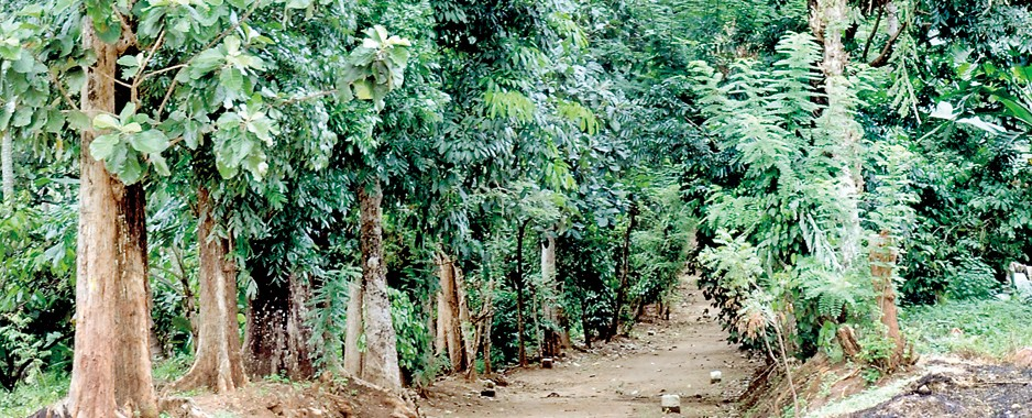 Questions mount over felling of trees to pay EPF, ETF dues