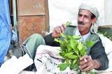 Now,  Arab-African pleasure leaf khat  in  Sri Lanka!