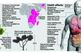 Khat  import scheme to widen curse  of drug addiction