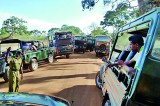 610 jeeps, 60 trackers – sum of one day's tragedy for hunted Yala animals