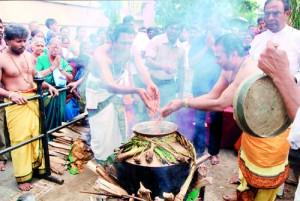 Thai Pongal celebrations last year