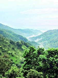 Magnificent views: Scenic misty hills