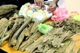 Wallapatta agarwood the new illegal million-rupee  racket