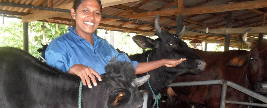 The need to develop local dairy farming