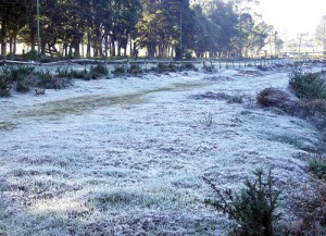 No, it's not snow, the ground is covered with frost