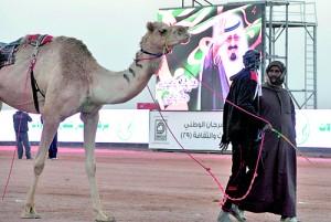 A Saudi jockey leads a camel past a picture of Saudi Arabia's King Abdullah bin Abdulaziz al-Saud at the end of a race in Riyadh this week (AFP)