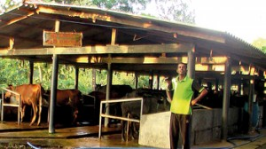 Wasantha Lal stands in front of his dairy
