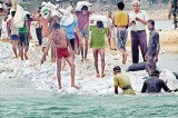 Dam it: 150,000 sand bags to stop sea water flowing into the Kalutara estuary