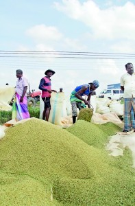 Paddy cultivation is no more profitable, say farmers