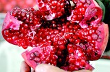 Pomegranate power: Fruit's design used to create batteries