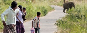 When their paths cross: VIllagers flee as they spot an elephant