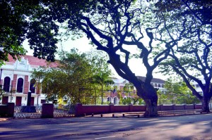 The tree-lined avenue in front of Royal College, Colombo