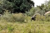 Centara: Base for unexplored jungle at door step