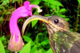 Birds of a feather: Hummingbird  family tree unveiled