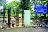 Strong call for sterilisation with Rs. 6m dog 'shelter' to be shut