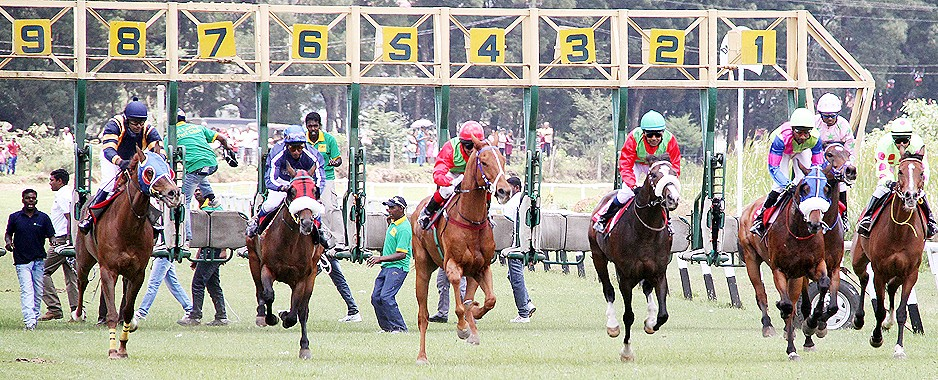 Atlantus' spark of gold beat the rest on turf
