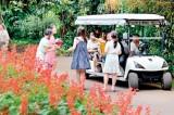 Hop in for a ride through Pera Gardens