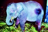 Cry halt to jumbo  captures, say  concerned activists
