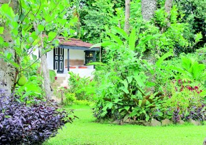 Feel the warm homeliness of a walauwe on a hill the for Landscaping plants in sri lanka