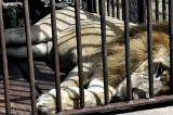 More zoos? When we can't even manage one