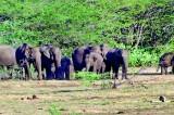 Drought in Hambantota is open season to kill animals