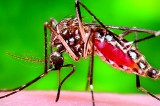 Want to repel mosquitoes? There's an app for that