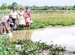 Only muddy water for Minneriya villagers