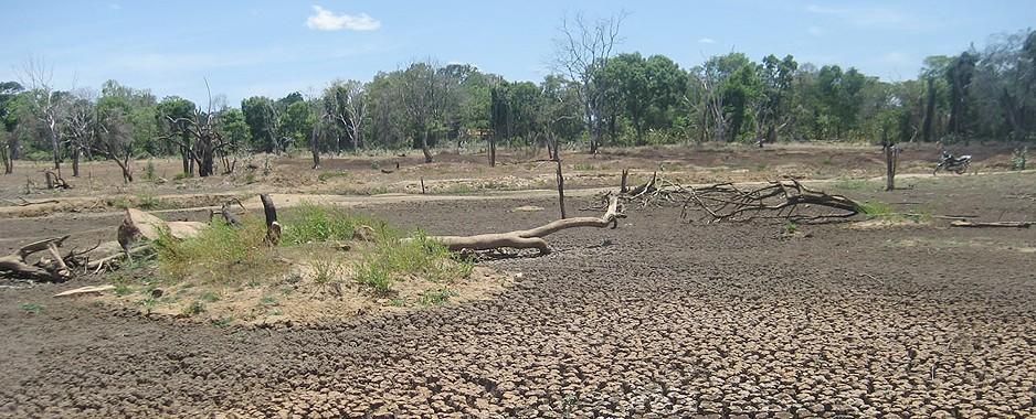 Despair reigns in drought-stricken areas