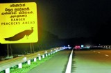 Peacocks' tragic dance of death on expressway