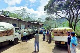 N'Eliya bumper potato harvest  to be distributed as drought relief