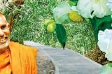 Documentary films on Anuradhapura and Namal Uyana on DVD format